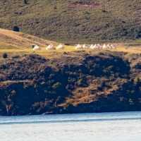 Glampers? across the lake from Glendhu bay