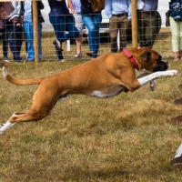 The Game Fair at Ragley Hall