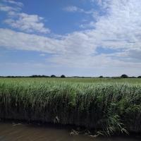 The waterway to Horsey Mare