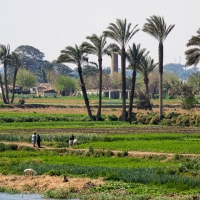 Nile, Cairo to Beni-Suif
