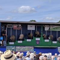 Buckinghamshire County Show