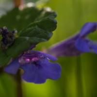 Garden wild flowers