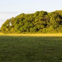 Ham Wood
