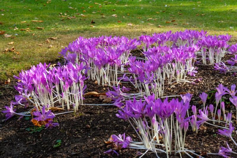 Cambridge Botanic Garden