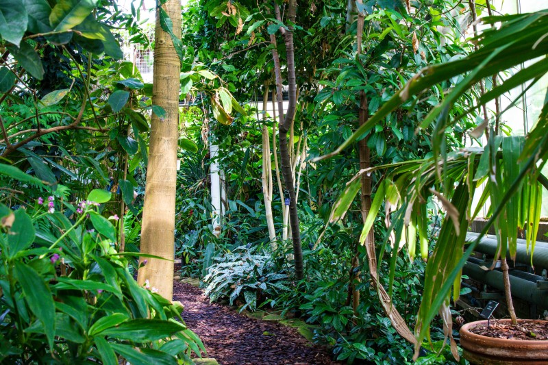 Cambridge Botanic Garden,