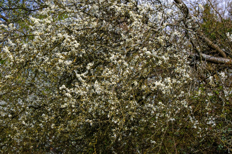 Kingswood Spring