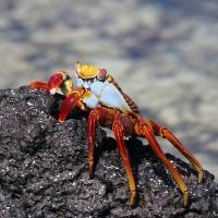 Ecuador, Galapagos San Cristobal Island, Cerro Brujo