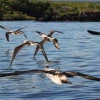 Ecuador, Galapagos, Santa Cruz Mangrove