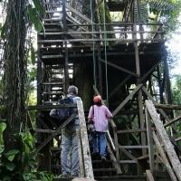 Ecuador, Amazon