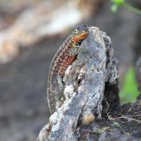 Ecuador, Galapagos, Santa Cruz Island