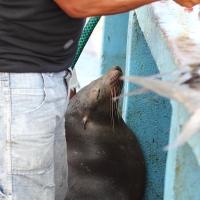 Ecuador, Galapagos, Santa Cruz Island, Sea Lion