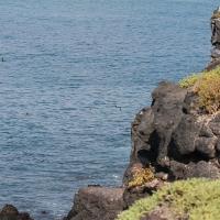 Ecuador, Galapagos, South Plaza Island.