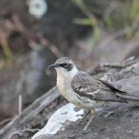 Ecuador, Galapagos, Santa Fe Island