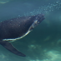 Ecuador, Galapagos. Floreana Island