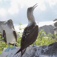Ecuador, Galapagos. Espanola Island,  Suarez Point
