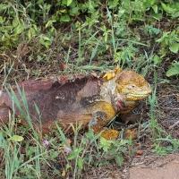 Ecuador, Galapagos. Santa Cruz, Cero Dragon.