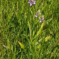 Les Vicheries Nature Reserve (Orchid Fields)