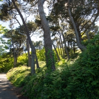 Walk to Pleinmont