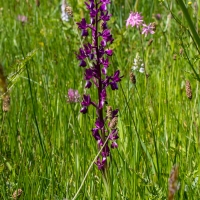 Les Vicheries Nature Reserve (Orchid Fields)