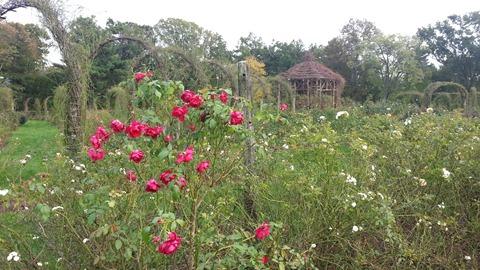 Elizabeth Rose Gardens, Hartford, CT