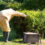 Guernsey Honeybee keeper