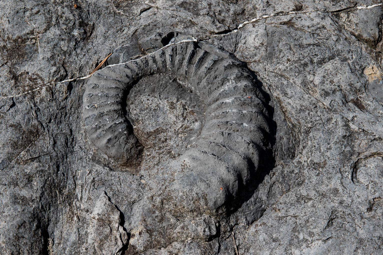 Rosso Ammonitico Veronese Formation, Dignes-les-Bains